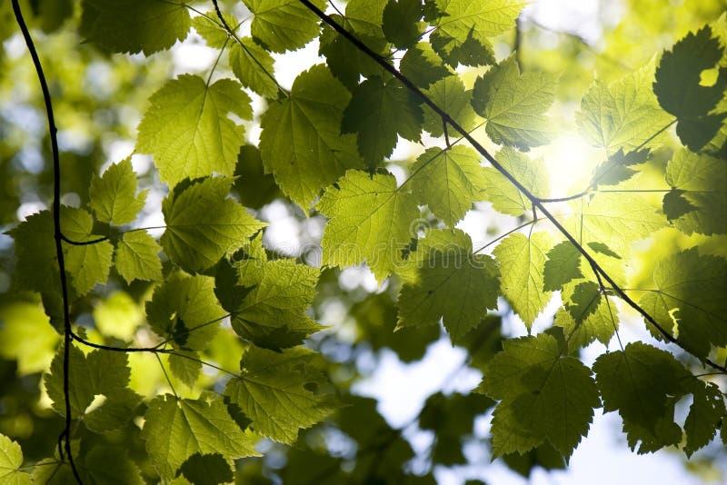 las z baldachimem sunny fotografia stock