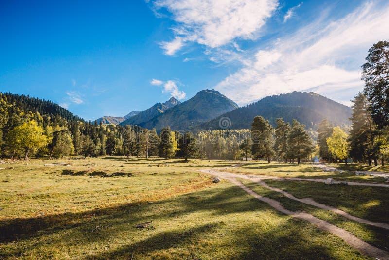 Las z niebieskim niebem i górami w tle Słońc drzewa i światło zdjęcie stock