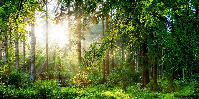 Las z słońcem zdjęcie stock