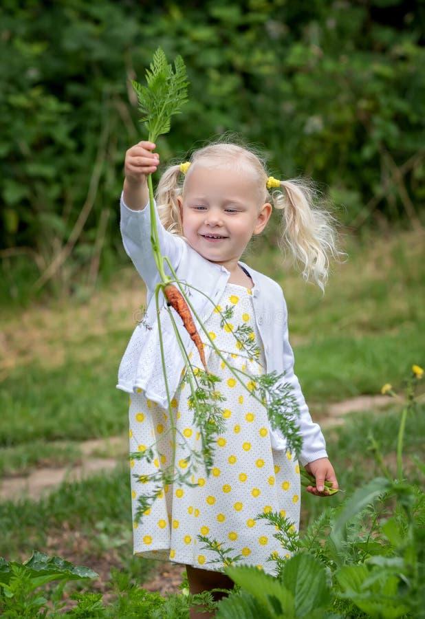 Las zanahorias de las cosechas de la niña fotos de archivo