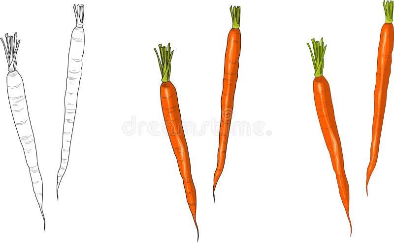 Las zanahorias fijaron tres maneras diferentes Ilustraci?n del vector libre illustration