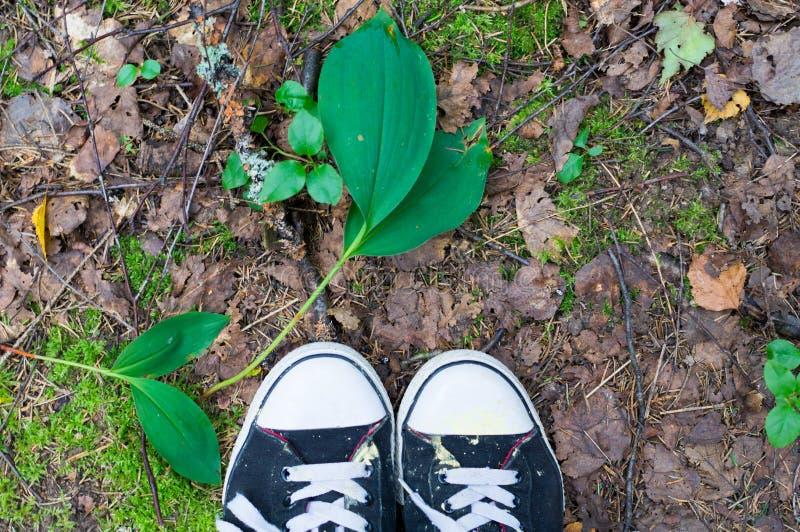 Las zapatillas de deporte caminan a través del bosque, fondo del bosque, naturaleza foto de archivo libre de regalías