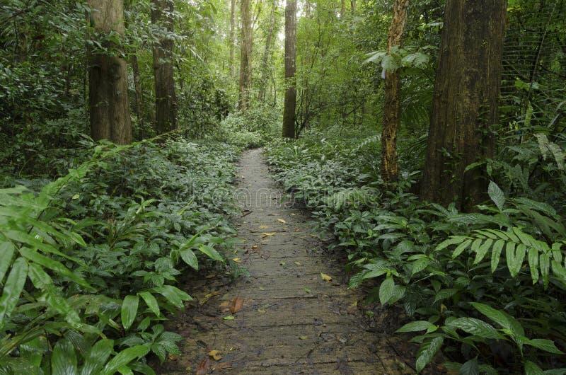 Las zielony o świetle przyrodniczym obrazy royalty free
