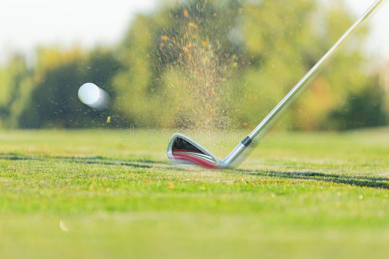 Lascando uma bola de golfe no verde com clube de golfe imagem de stock