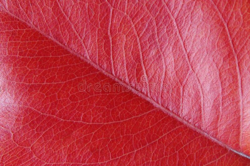 Lasci vicino in su nel colore rosso fotografia stock