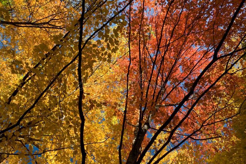 Download Lascia Il Colore Giallo Rosso Fotografia Stock - Immagine di rosso, selva: 7315686