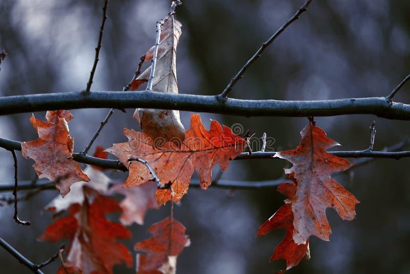Lascia il deatil su un albero dell'inverno immagini stock