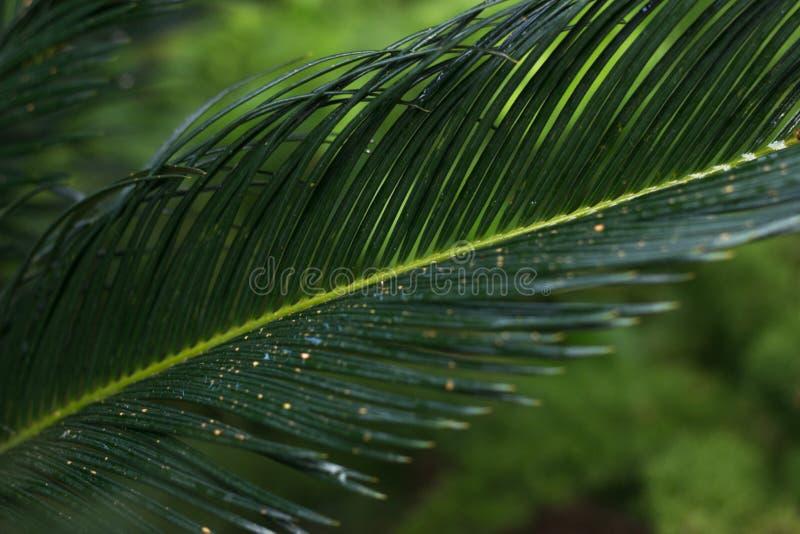 Lasciare verde nella foresta tropicale fotografia stock