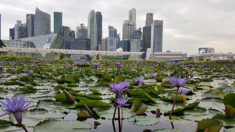 Laserowy przedstawienie Singapur Marina zatoki ogród zatoką i piasek fotografia royalty free