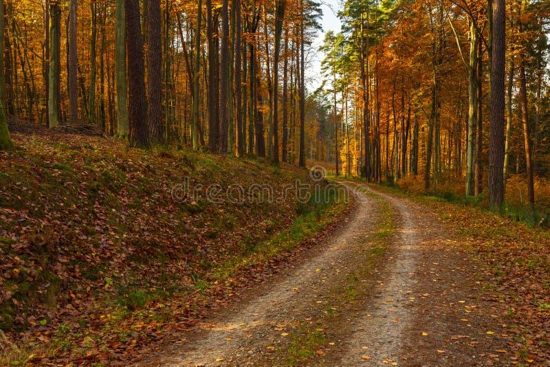 Lasowa ścieżka w jesień kolorach w Tricity krajobrazu parku, Gdan fotografia stock