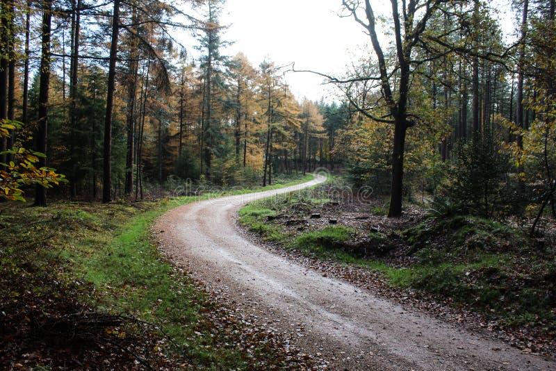 Lasowa ścieżka w jesieni, park narodowy veluwe w holandiach fotografia royalty free