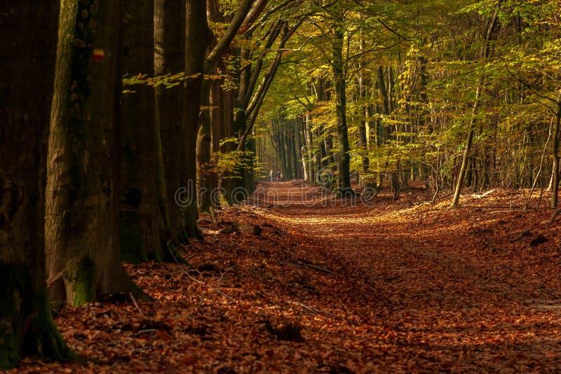 Lasowa ścieżka z kolarstwo rodziną w kolorowym jesień lesie obrazy royalty free