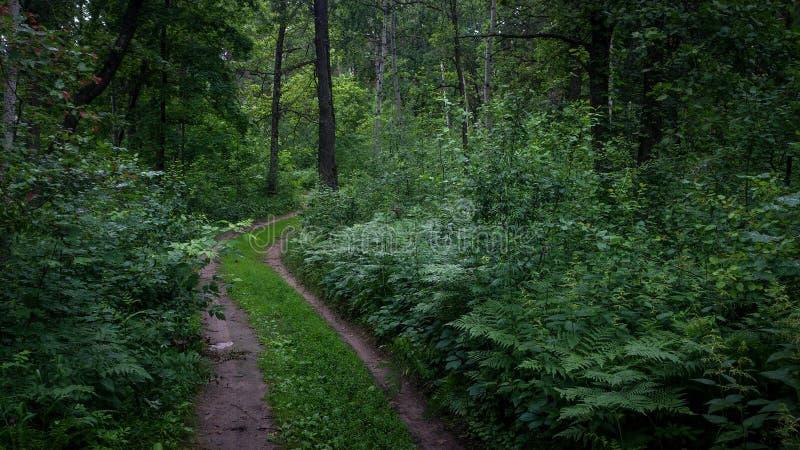 Lasowa cisza zdjęcie stock