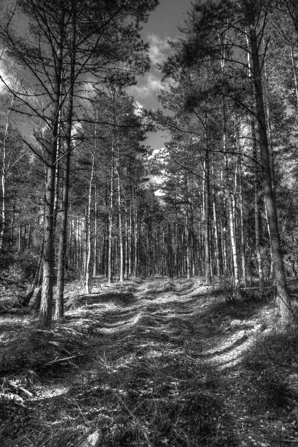 Lasowa droga fotografia stock