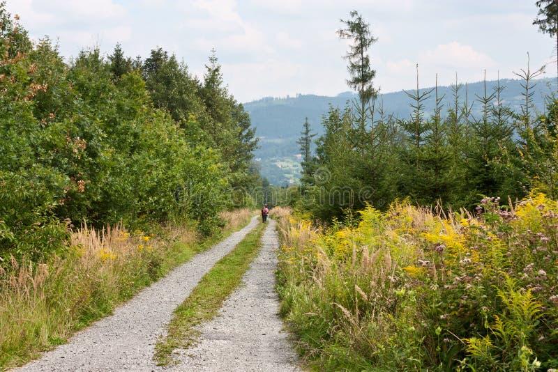Lasowa droga gruntowa z chodzącymi turystami w ślązaka regionie w czech republice fotografia stock