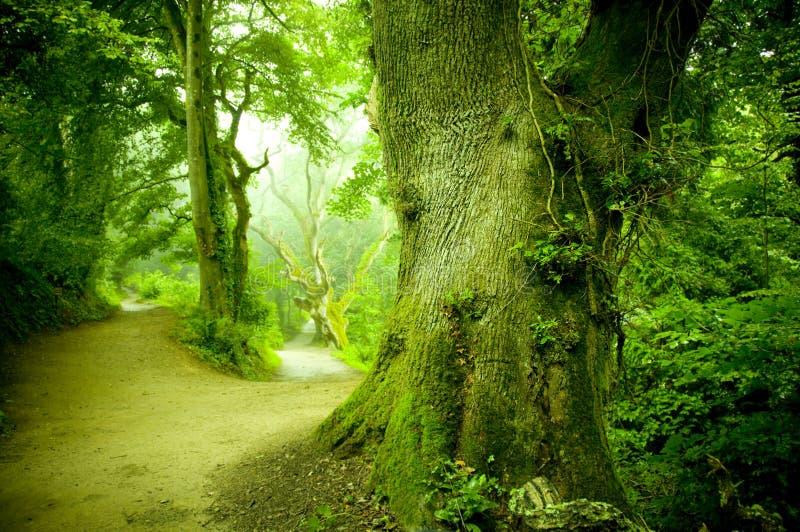 lasowa droga przemian zdjęcie royalty free