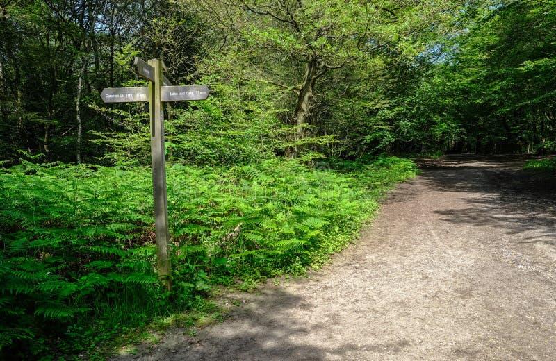 Lasowa droga przemian z kierunkowskazem ustawiającym w łacie paprocie fotografia stock