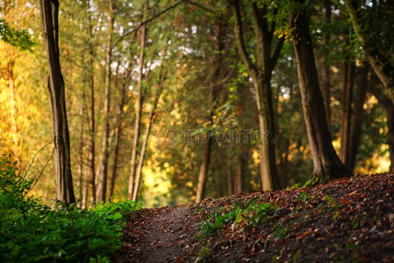 Lasowa droga przemian z spadać liśćmi na tle drzewa fotografia royalty free
