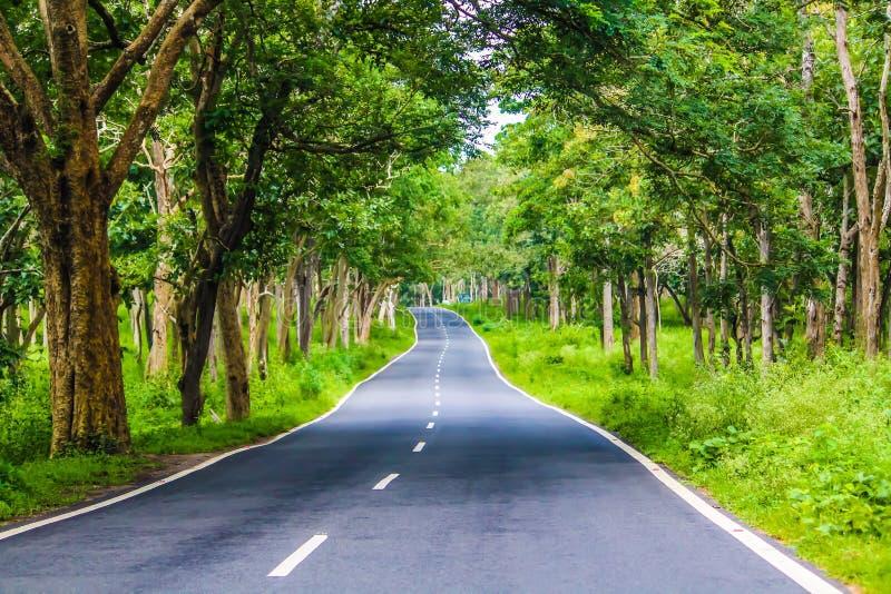 Lasowa droga w Bandipur parku narodowym fotografia stock