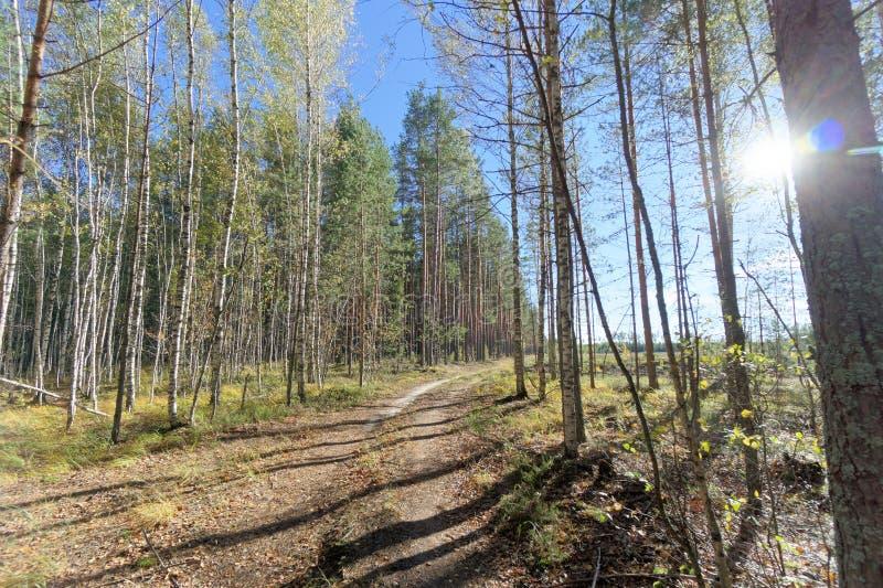 Lasowa droga w wczesnej jesieni Jaskrawy słońce w ramie świecenie zdjęcie royalty free