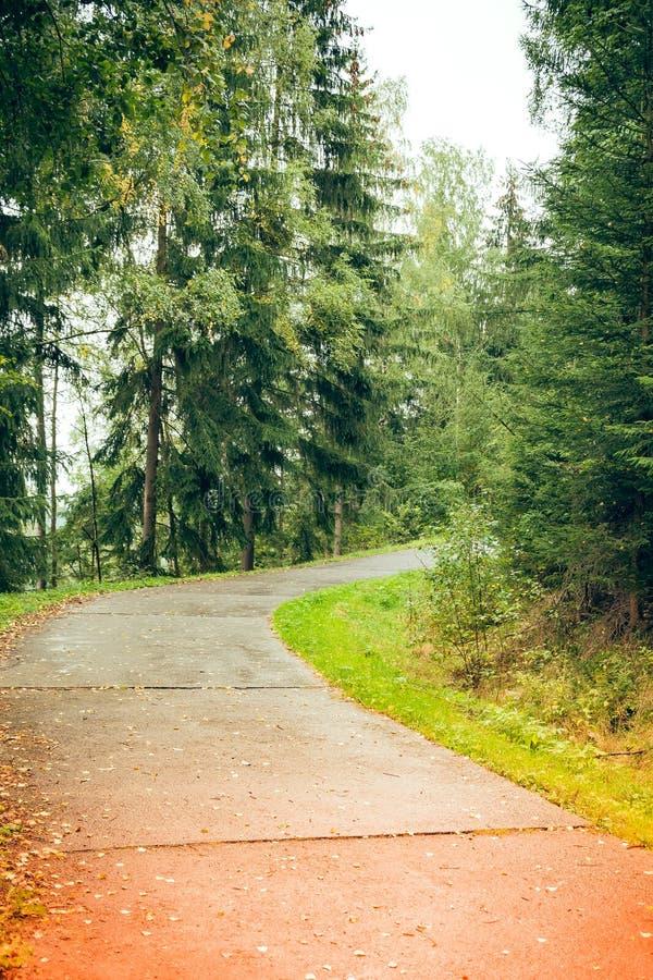 Lasowa droga z światłem słonecznym obrazy stock