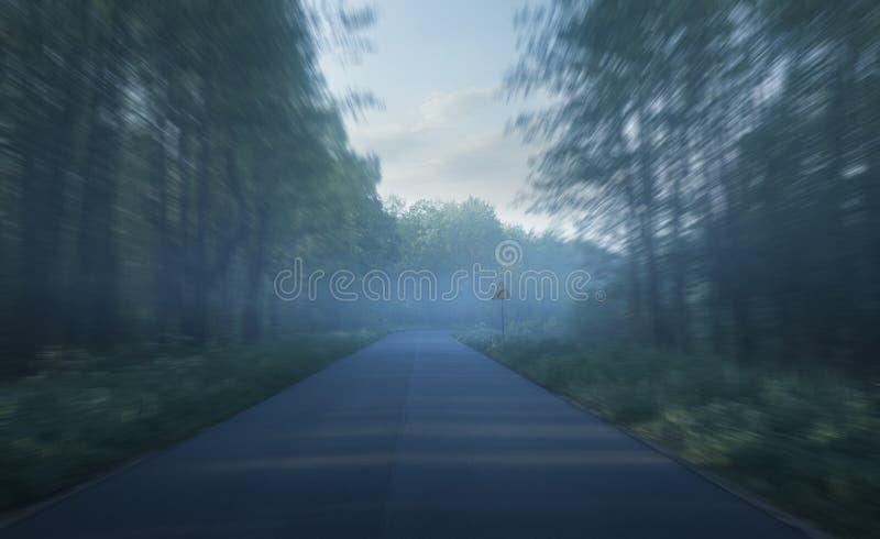 Lasowa droga z mgłą przy wysoką prędkością zdjęcie stock