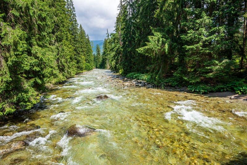 lasowa halna rzeka z siklaw? nad ska?ami obraz royalty free