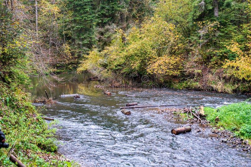 lasowa halna rzeka z siklaw? nad ska?ami zdjęcia royalty free