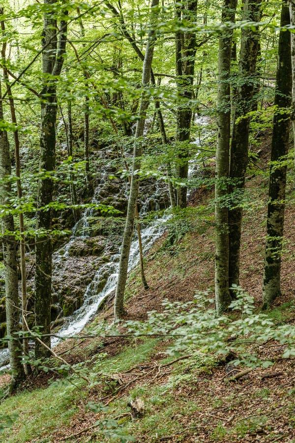 Lasowa i mała siklawa fotografia stock