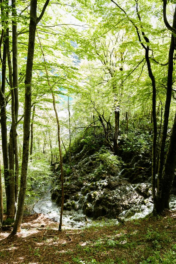 Lasowa i mała siklawa zdjęcia stock
