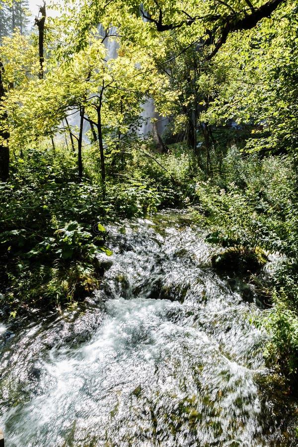 Lasowa i mała siklawa w lesie zdjęcie stock