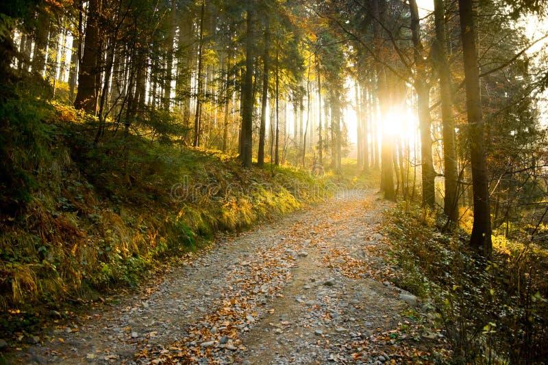 lasowa jesień ścieżka zdjęcie royalty free