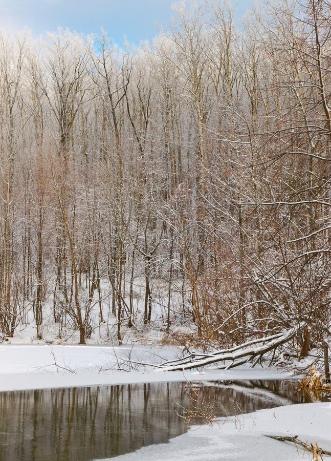 Lasowa Jeziorna Zima Zdjęcia Royalty Free