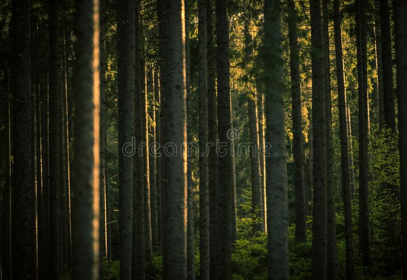 Lasowa lato sceneria obraz stock