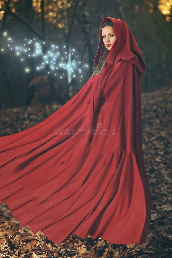 Lasowa magia zdjęcie stock
