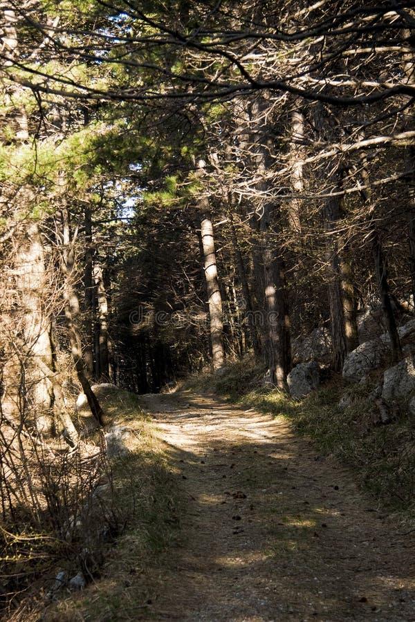 lasowa mistyczka zdjęcie royalty free