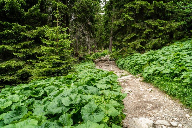 Lasowa nożna ścieżka z skałami zdjęcia stock