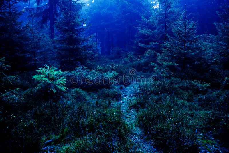 lasowa noc zdjęcie stock