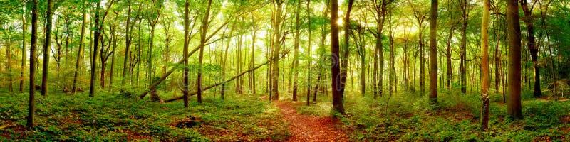 Lasowa panorama z jaskrawym słońcem zdjęcie royalty free