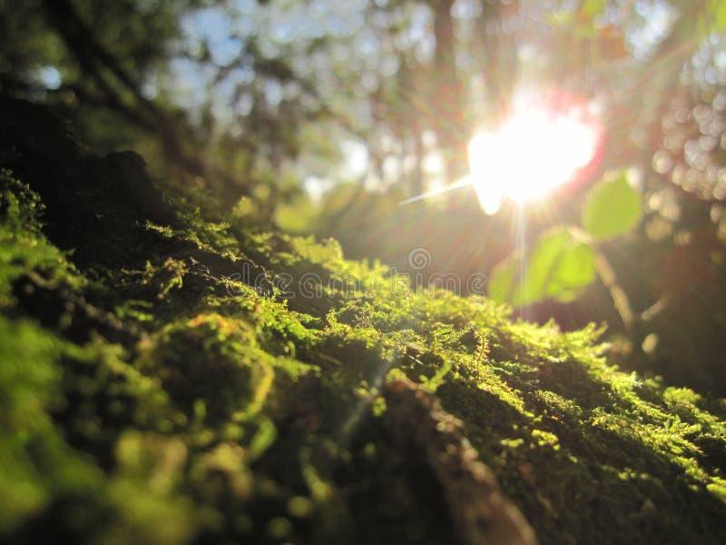 Lasowa podłoga zdjęcia stock