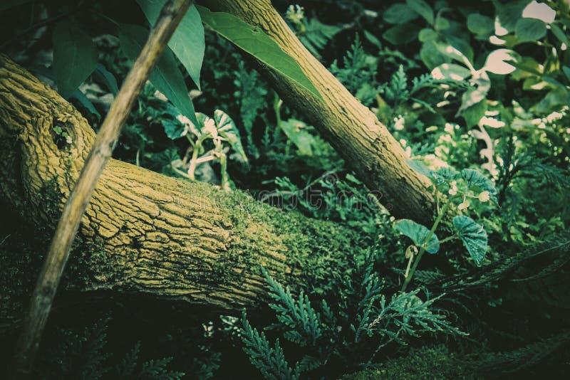 Lasowa podłoga zdjęcie royalty free