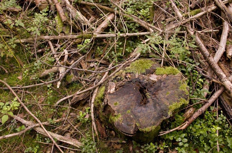 Lasowa podłoga zdjęcia royalty free