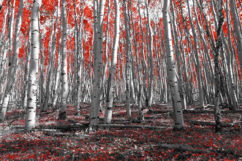 Lasowa podłoga Zakrywająca Z Kolorowymi spadków liśćmi obraz stock