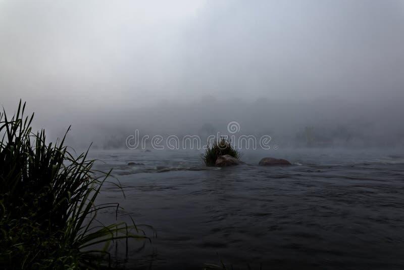 Lasowa Rzeczna gwałtownego ranku mgła przy wschodem słońca zdjęcia royalty free
