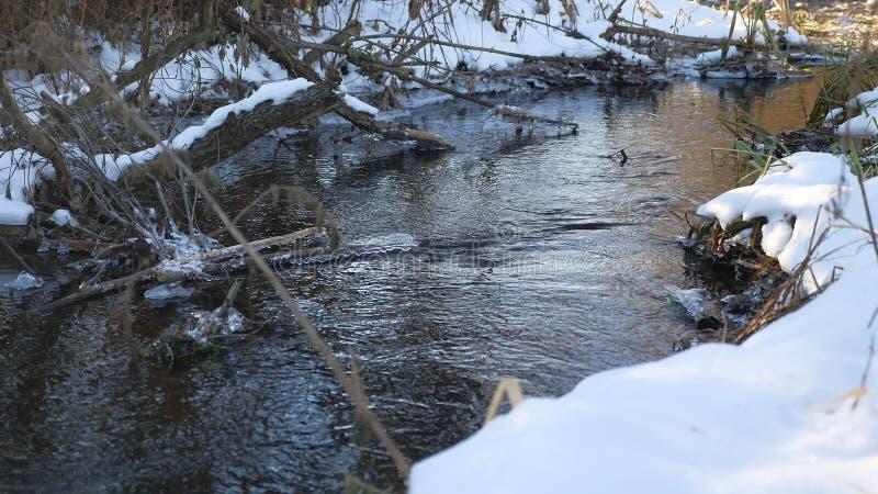 Lasowa rzeczna opóźniona zima topiący bieżącej wody natury lodowy krajobraz przyjazd wiosna zdjęcie stock