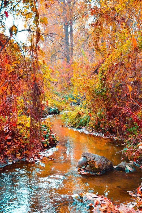 Lasowa rzeka płynie pionowo w głębie, bardzo piękny krajobraz fotografia stock
