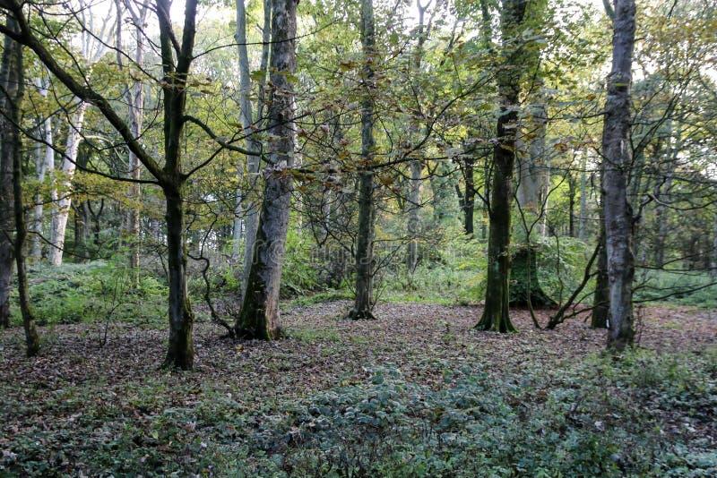 Download Lasowa Scena W Anglia W Wiośnie Obraz Stock - Obraz złożonej z gałąź, lancashire: 106902083