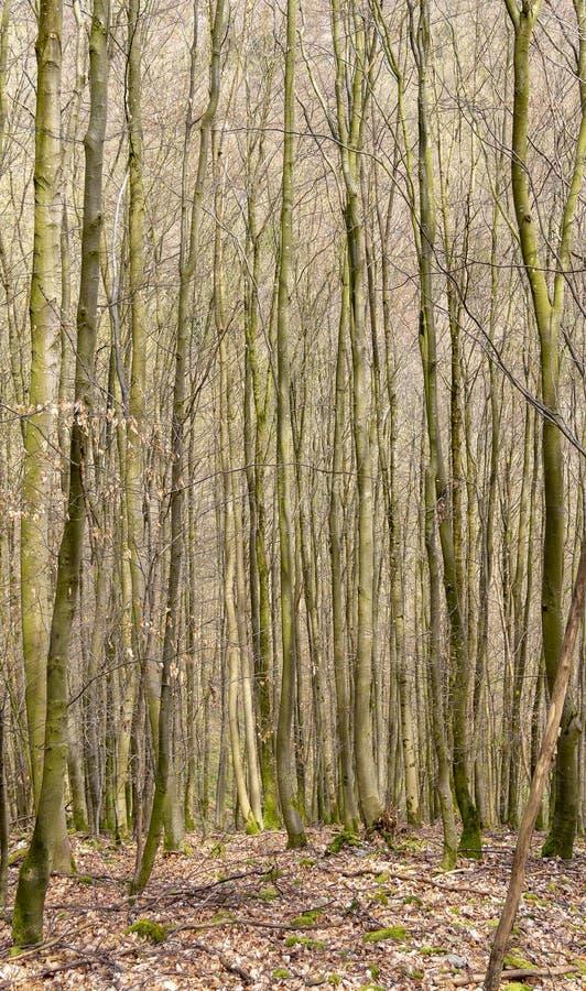 Lasowa sceneria przy wiosna czasem obrazy royalty free