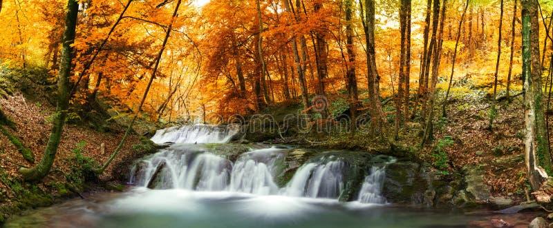 Lasowa siklawa zdjęcia stock