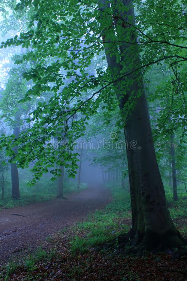 lasowa tajemnicza droga zdjęcie royalty free